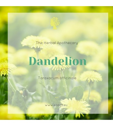 The Herbal Apothecary: Dandelion